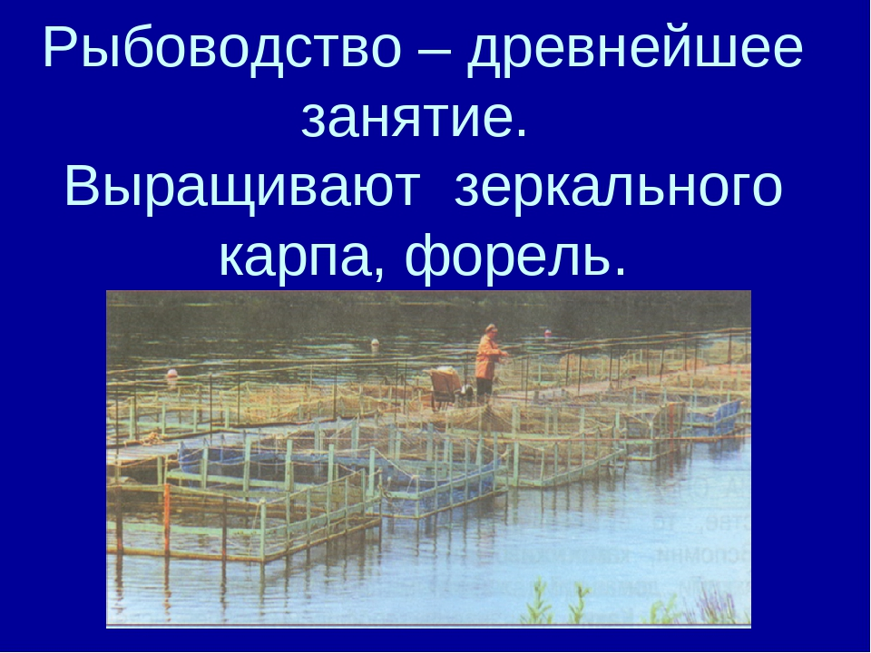 Рыбоводство – древнейшее занятие. Выращивают зеркального карпа, форель.