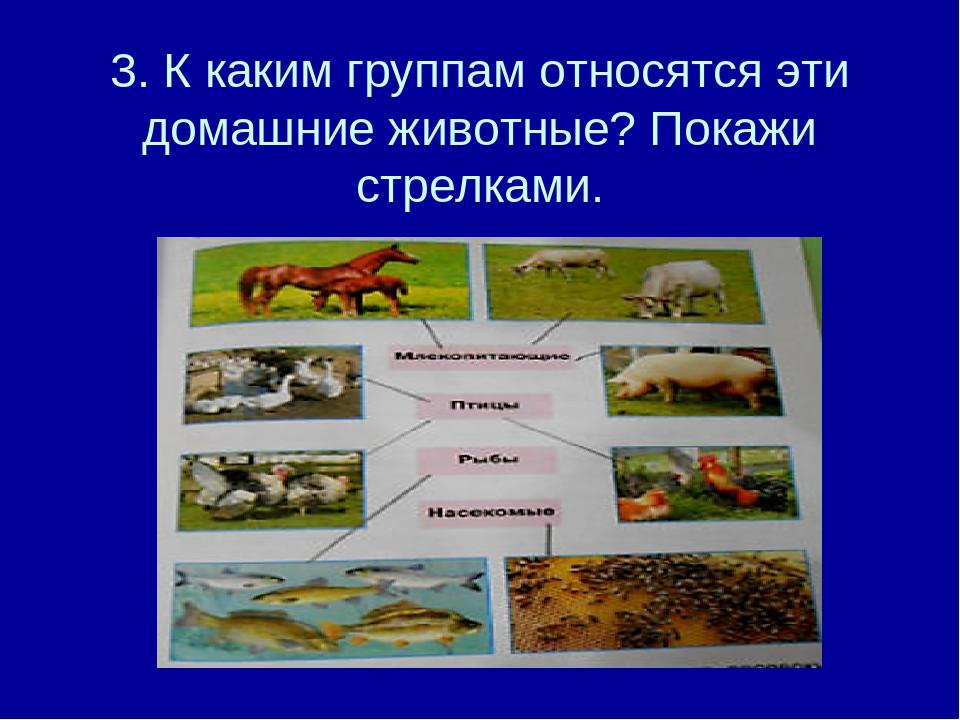 3. К каким группам относятся эти домашние животные? Покажи стрелками.