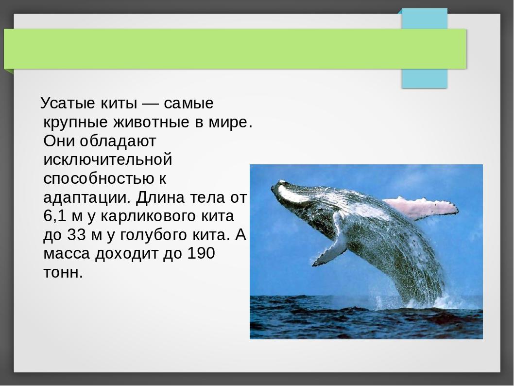 Усатые киты — самые крупные животные в мире. Они обладают исключительной спо...