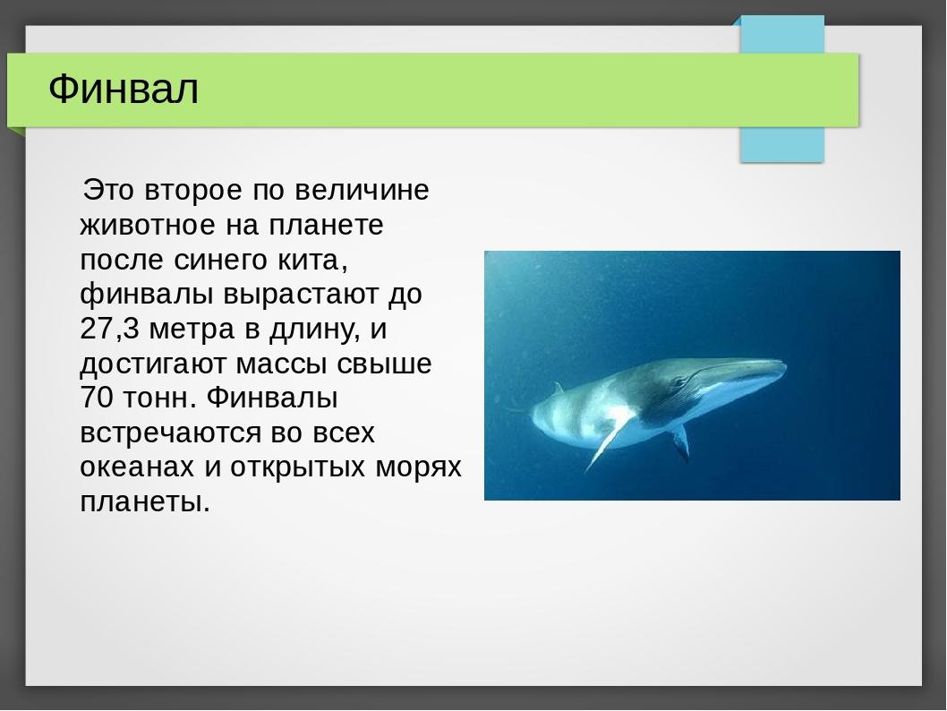 Финвал Это второе по величине животное на планете после синего кита, финвалы...