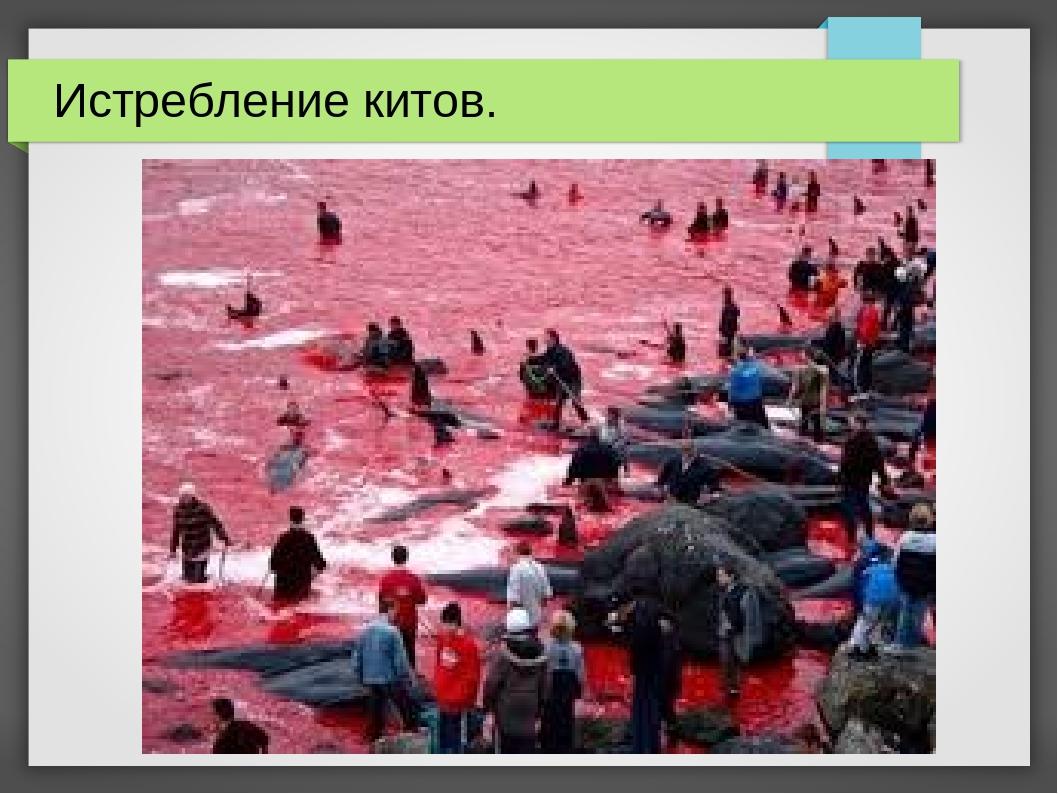 Истребление китов.