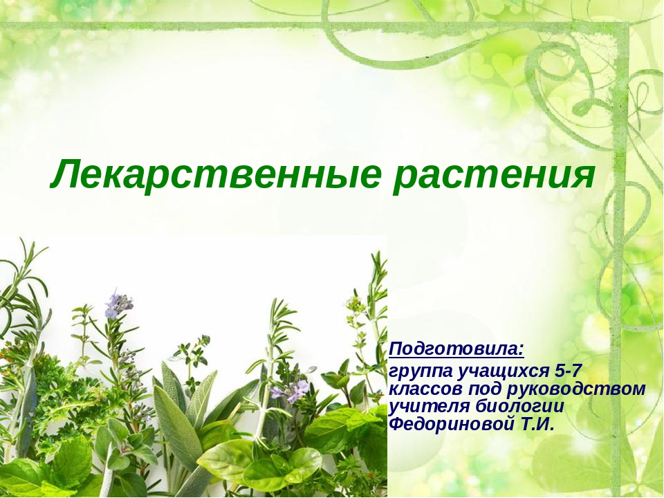 картинки презентации лекарственные растения полностью