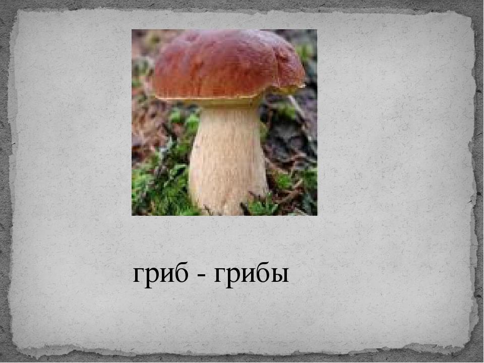 гриб - грибы
