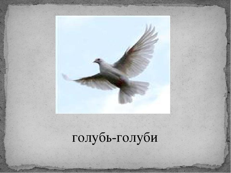 голубь-голуби