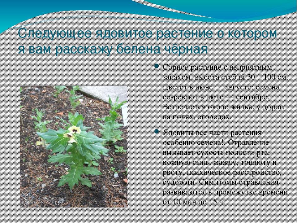 Ядовитые растения фото с названиями и описанием