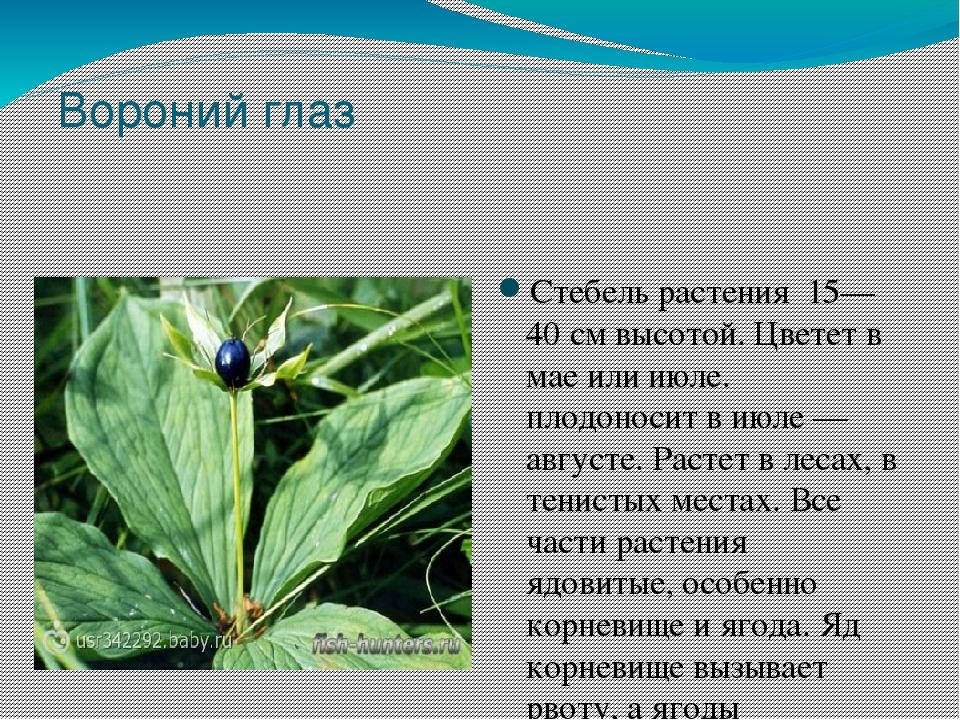 тоже ядовитые растения краснодарского края с картинками пластиковые или бумажные