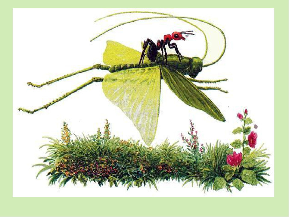 Картинки к рассказу приключение муравьишки