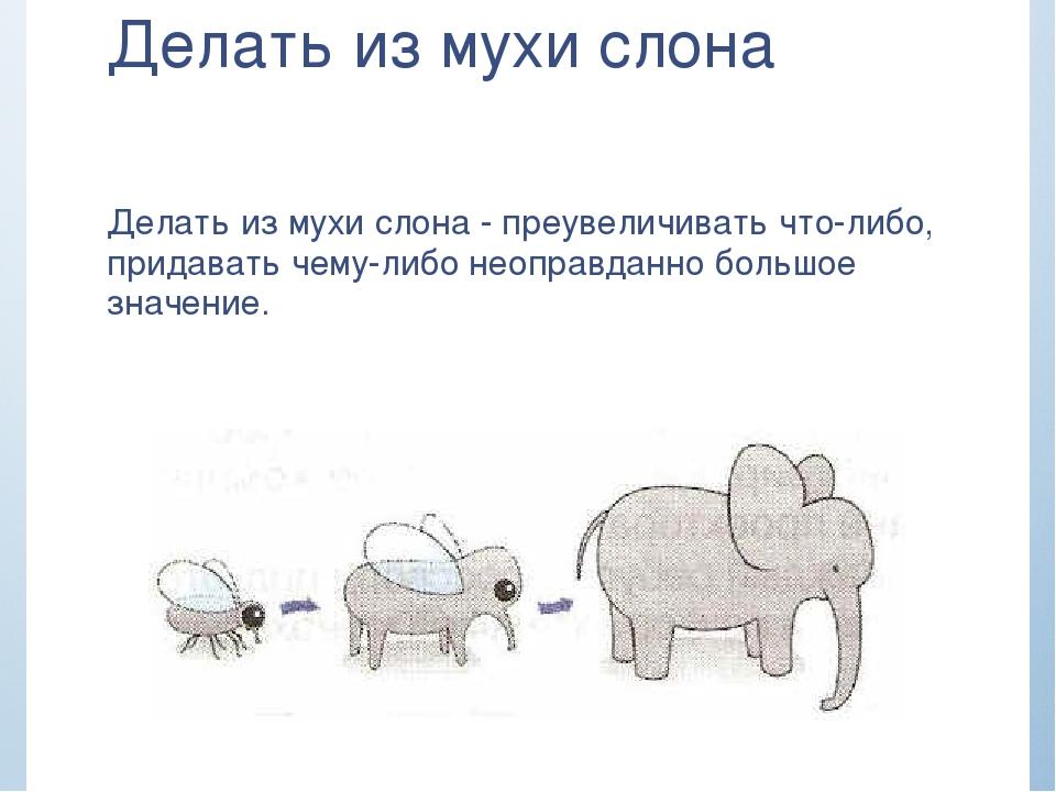 Днем красоты, картинка с мухой я слон