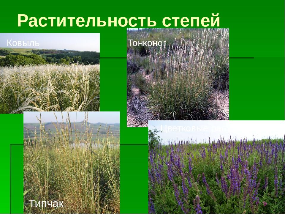 Растения степи фото с названиями