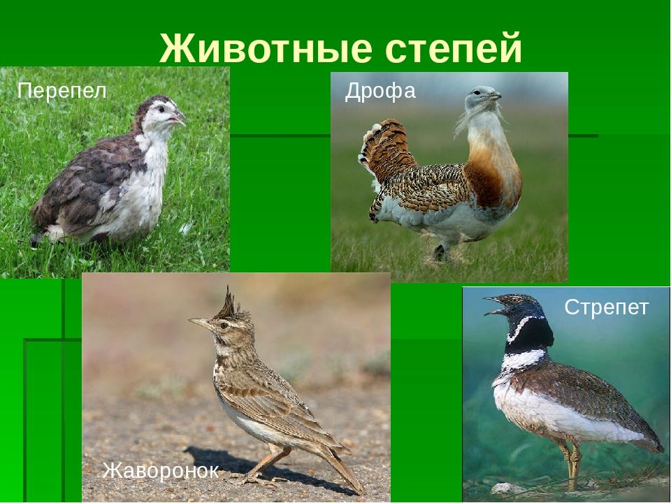 животные степи в россии фото и названия сожалению, информации