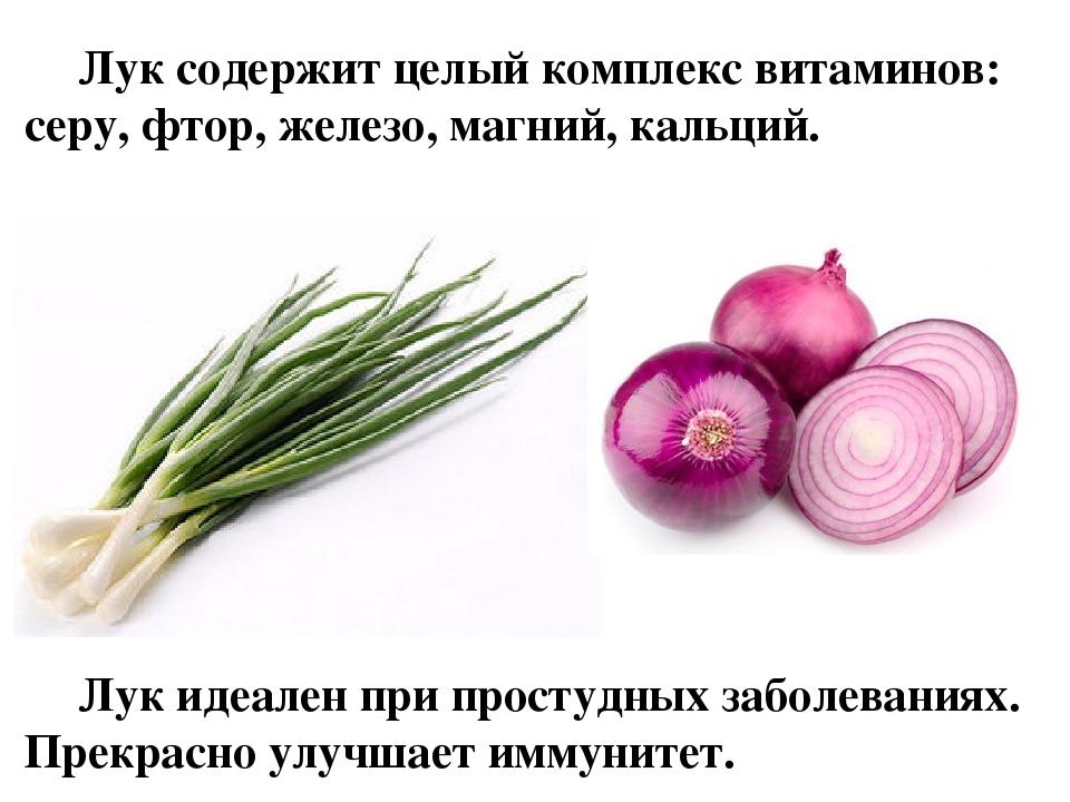Бизнес план выращивания лука репчатого 38