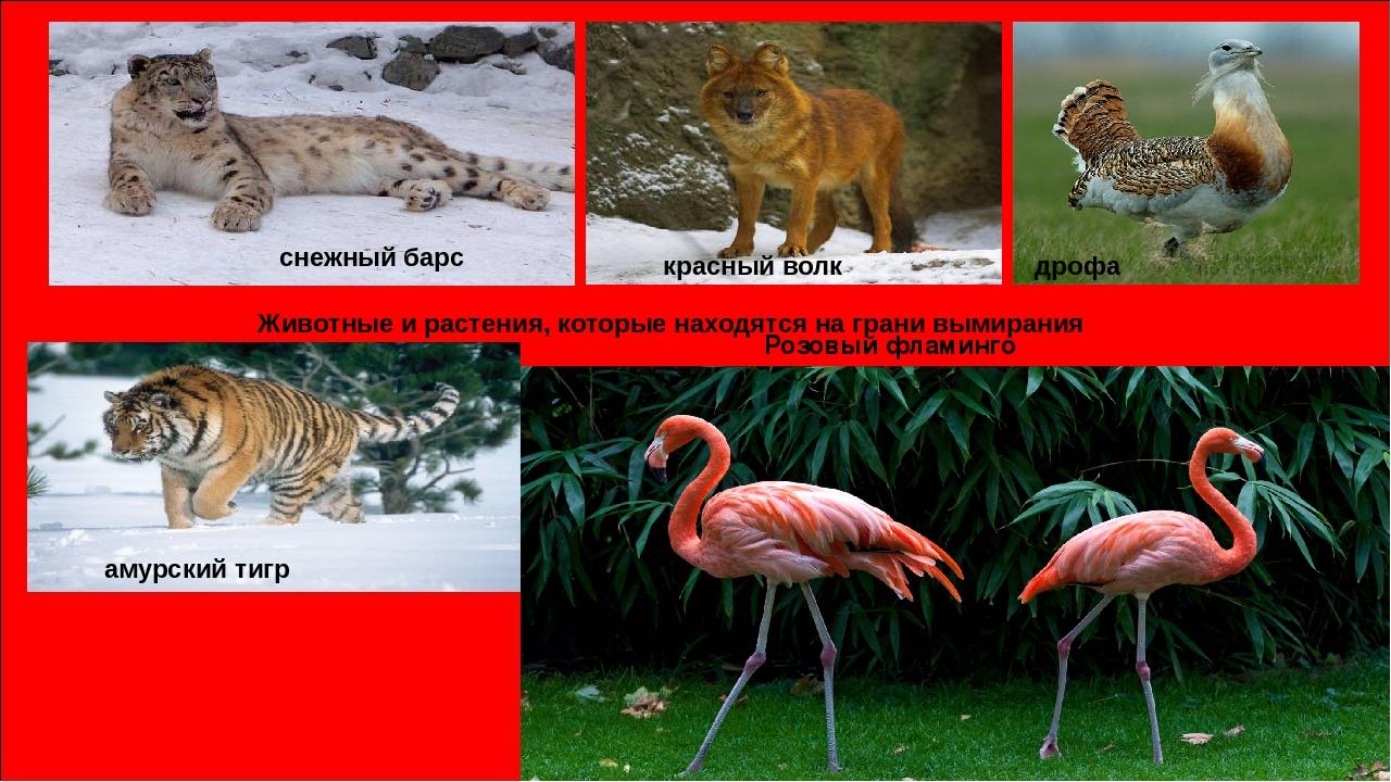 картинки из красной книги животные и растения россии изменить свой внешний
