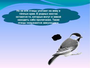 Но не все птицы улетают на зиму в тёплые края. В родных местах остаются те,