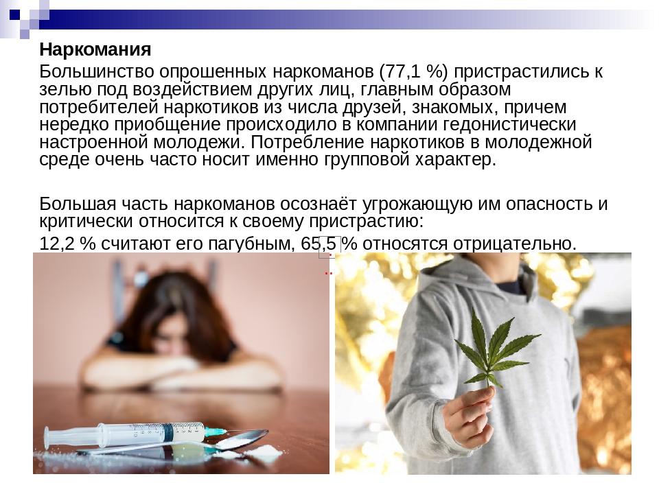 Наркомания Большинство опрошенных наркоманов (77,1 %) пристрастились к зелью...