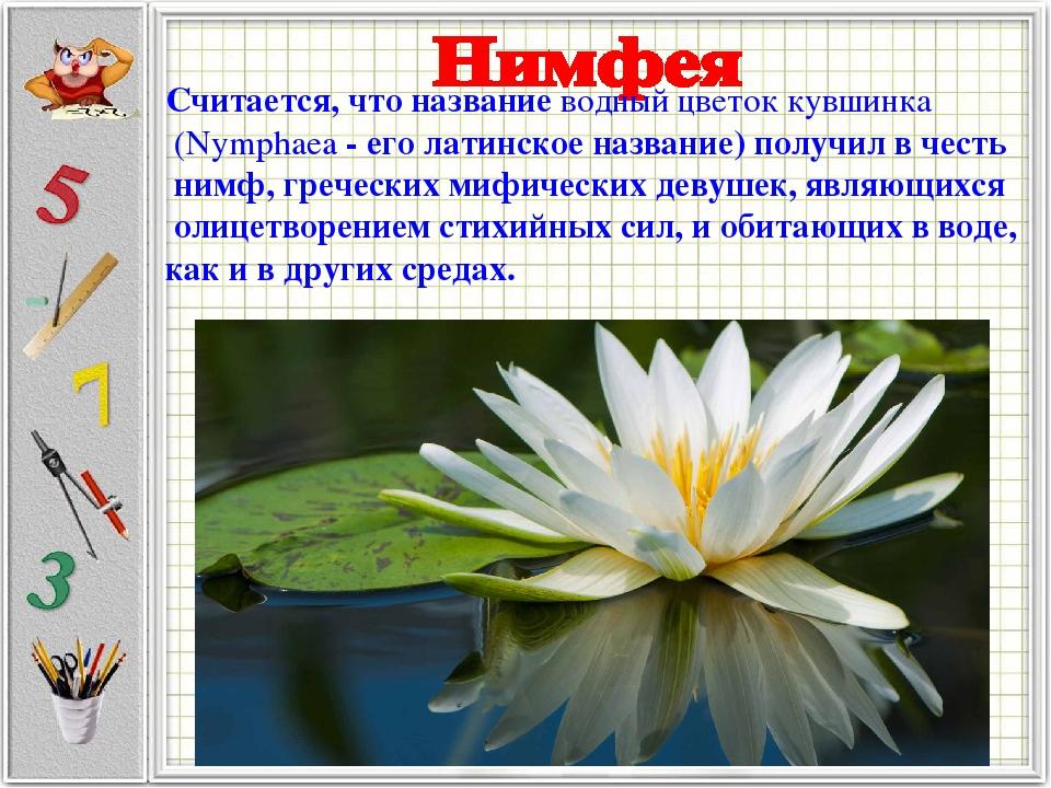 Считается, что названиеводный цветок кувшинка (Nymphaea- его латинское назв...