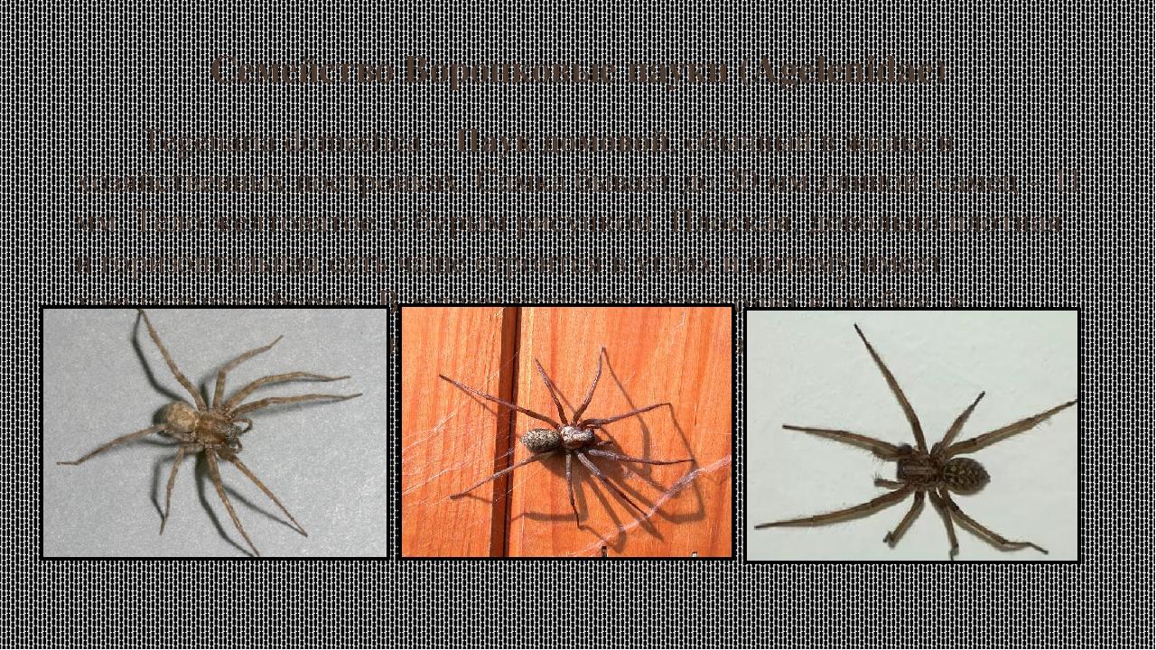 электричество, вода пауки волгоградской области фото и название само