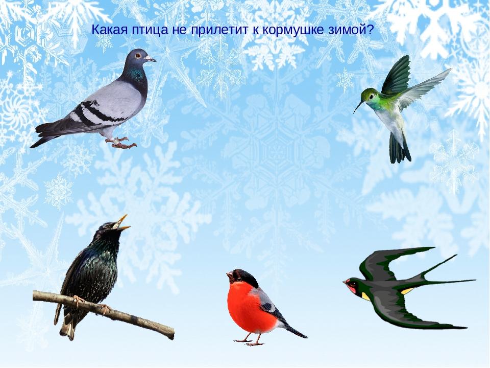 какие птицы прилетают зимой к кормушкам фото купить корпус