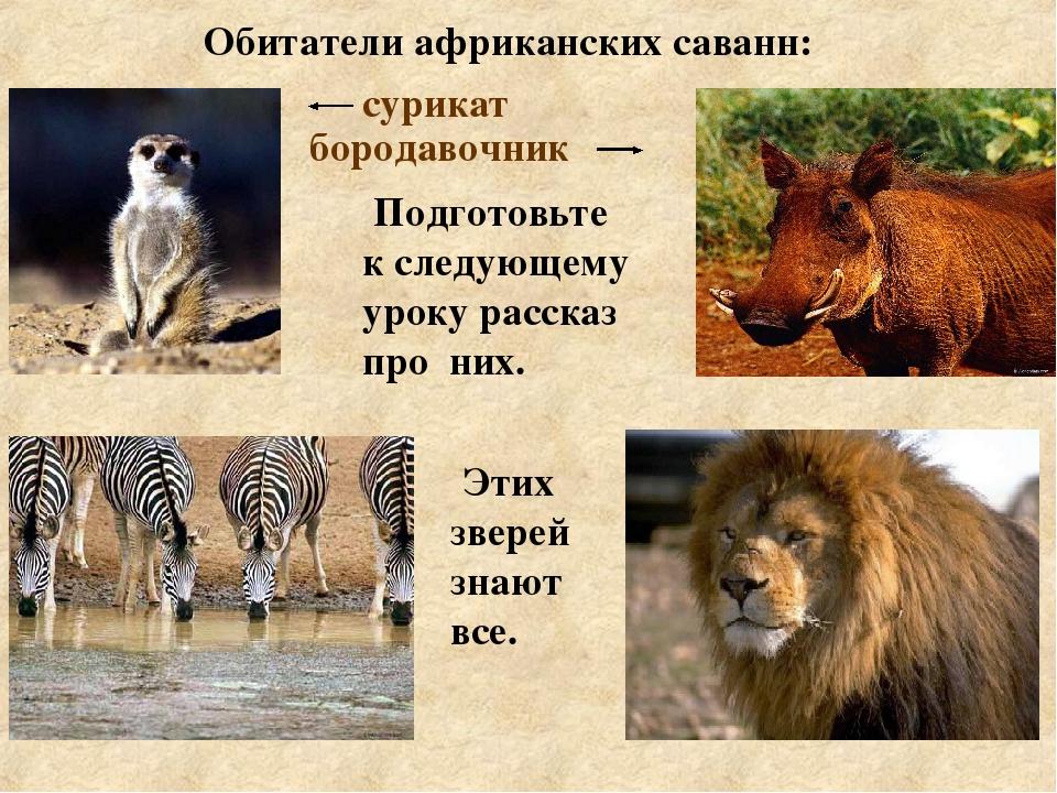 Картинки животных африки с информацией про них