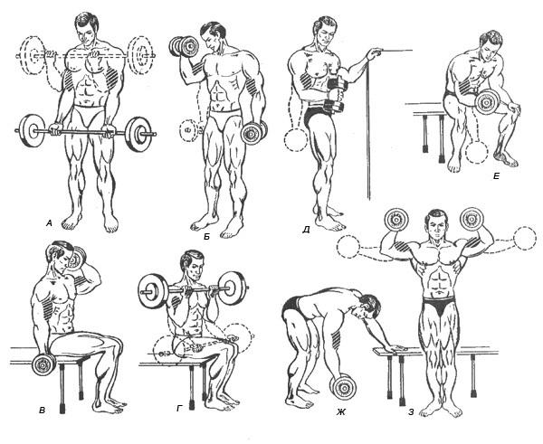 основе технологий какие упражнения со штангой картинки как