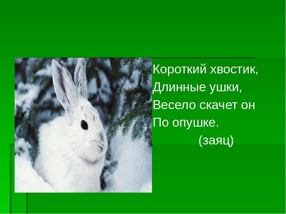 Короткий хвостик, Длинные ушки, Весело скачет он По опушке. (заяц)