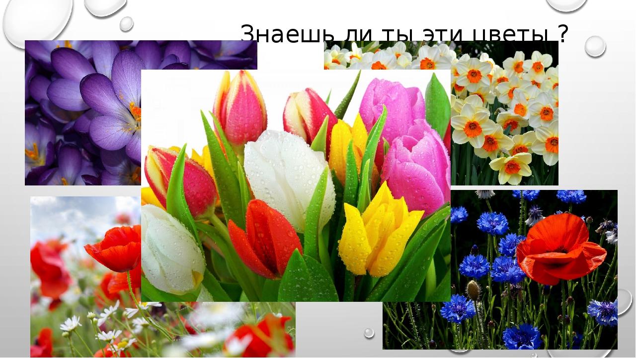 Знаешь ли ты эти цветы ?