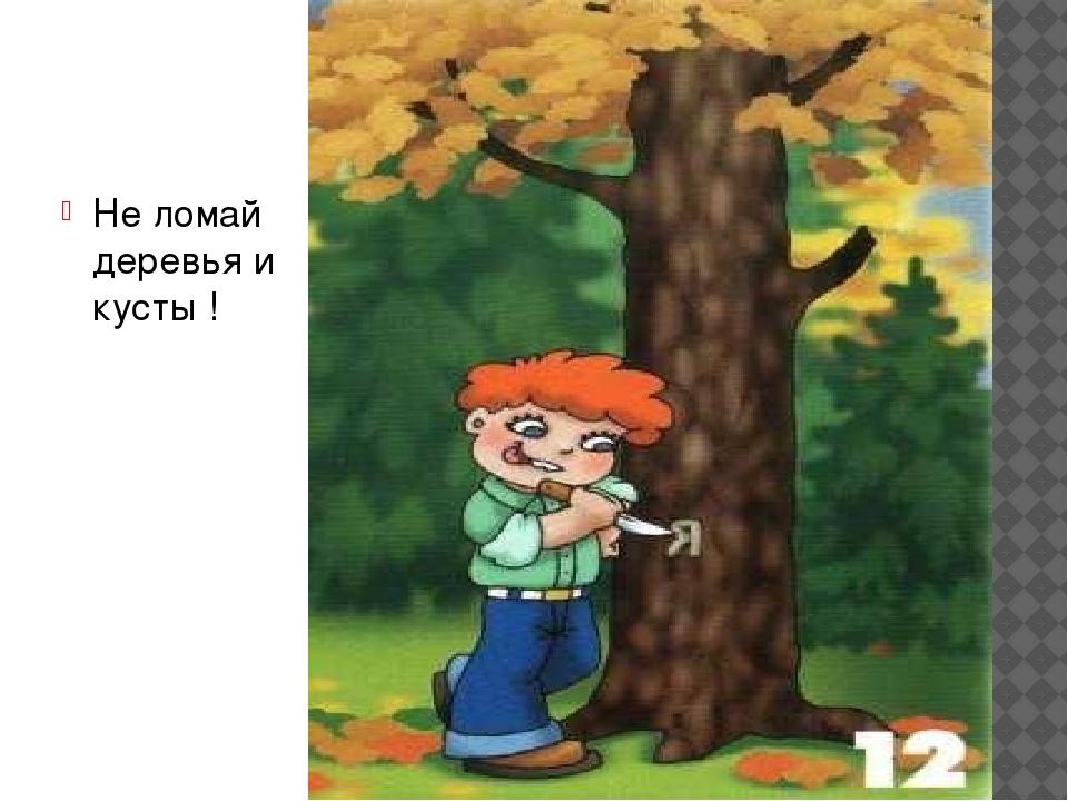 Картинки не ломай деревья для детей