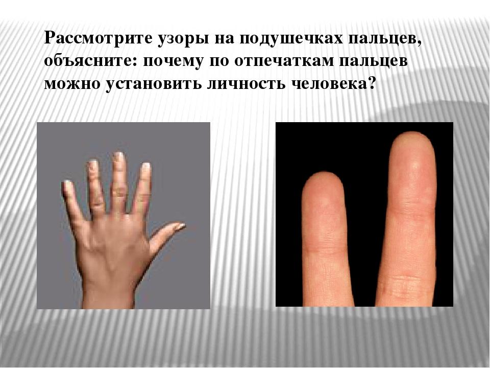 Рассмотрите узоры на подушечках пальцев, объясните: почему по отпечаткам паль...