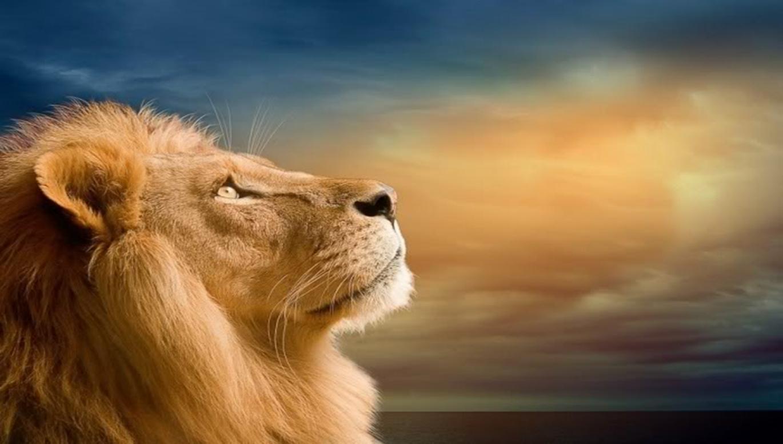 Картинки с надписью со львами, февраля