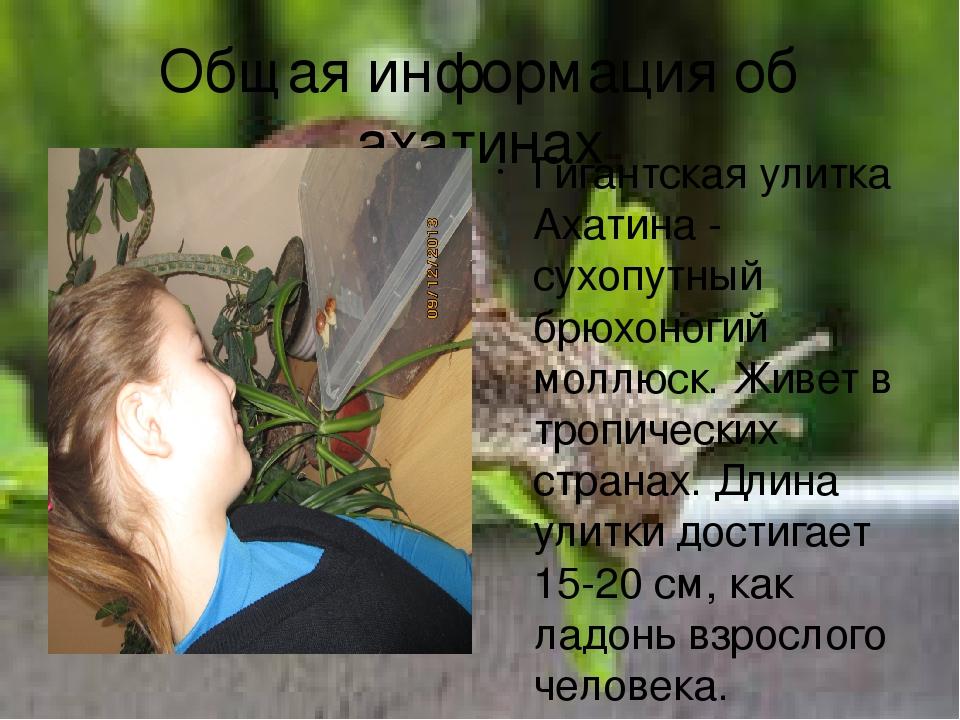 Общая информация об ахатинах Гигантская улитка Ахатина - сухопутный брюхоноги...