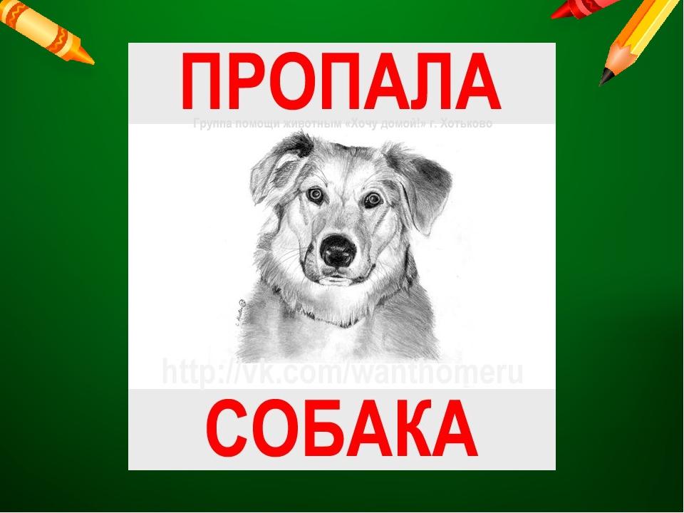 Днем, пропала собака в картинках