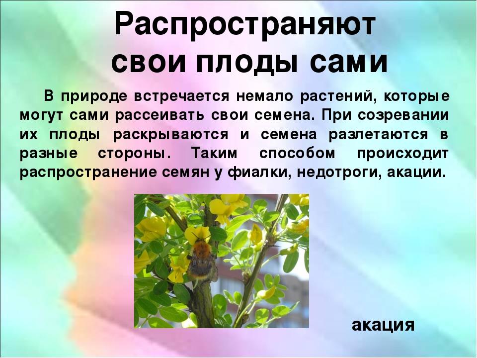 """Презентация по биологии на тему """"Распространение семян и плодов"""""""