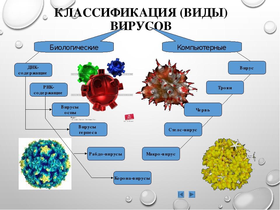 Картинка классификация вирусов