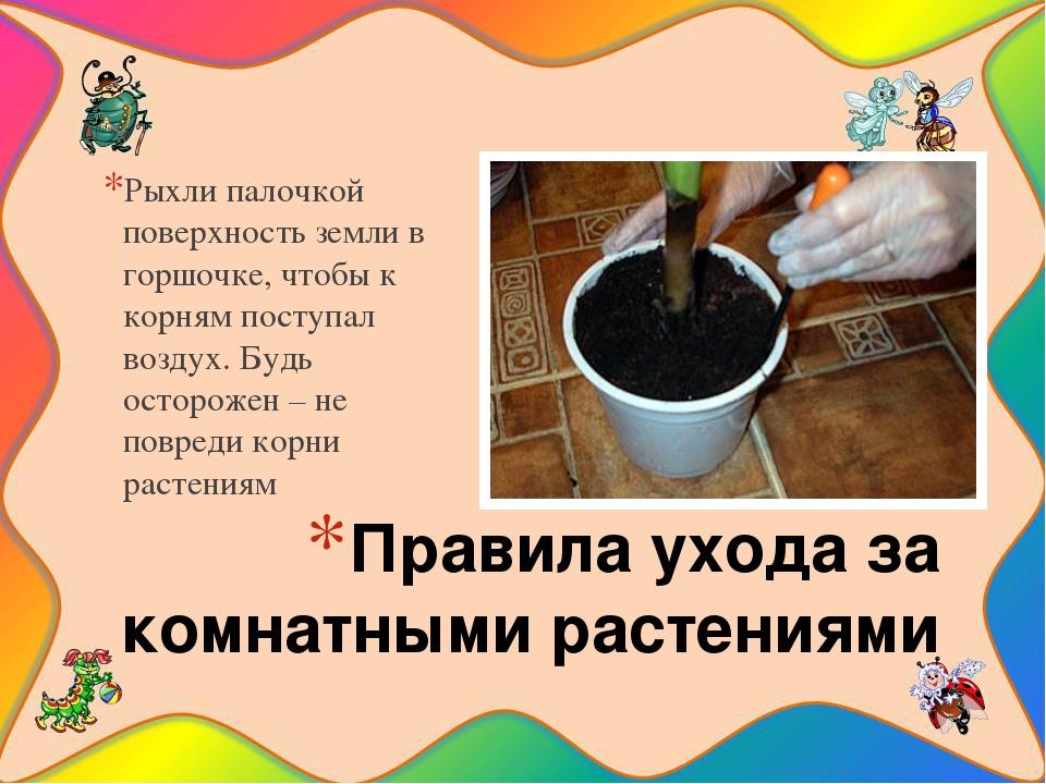 Правила ухода за комнатными растениями Рыхли палочкой поверхность земли в гор...