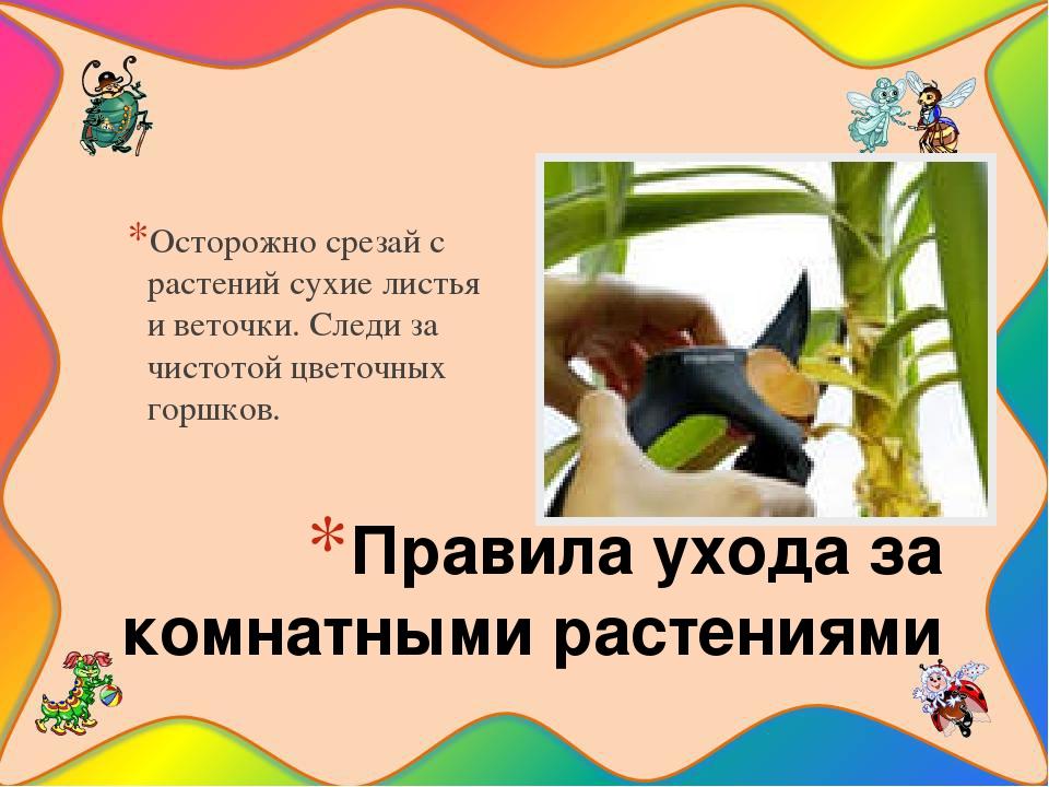 Правила ухода за комнатными растениями Осторожно срезай с растений сухие лист...