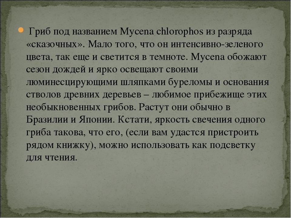 Гриб под названием Mycena chlorophos из разряда «сказочных». Мало того, что...