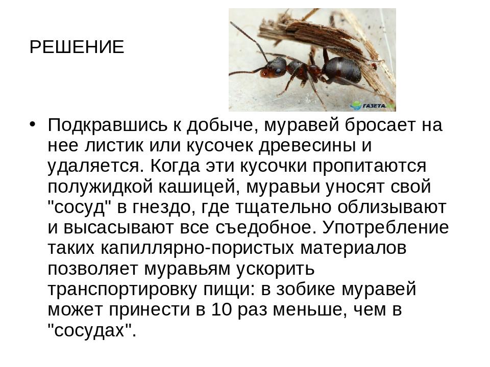 РЕШЕНИЕ Подкравшись к добыче, муравей бросает на нее листик или кусочек древе...