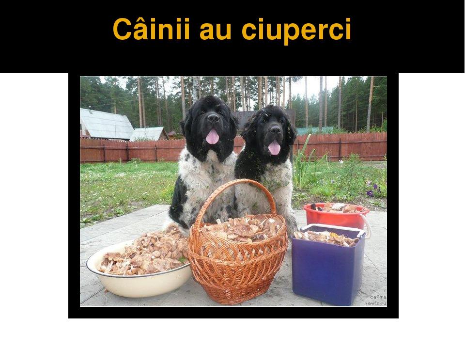 Câinii au ciuperci