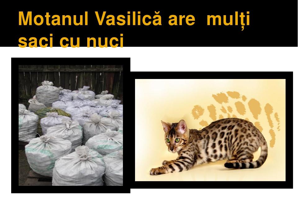 Motanul Vasilică are mulţi saci cu nuci