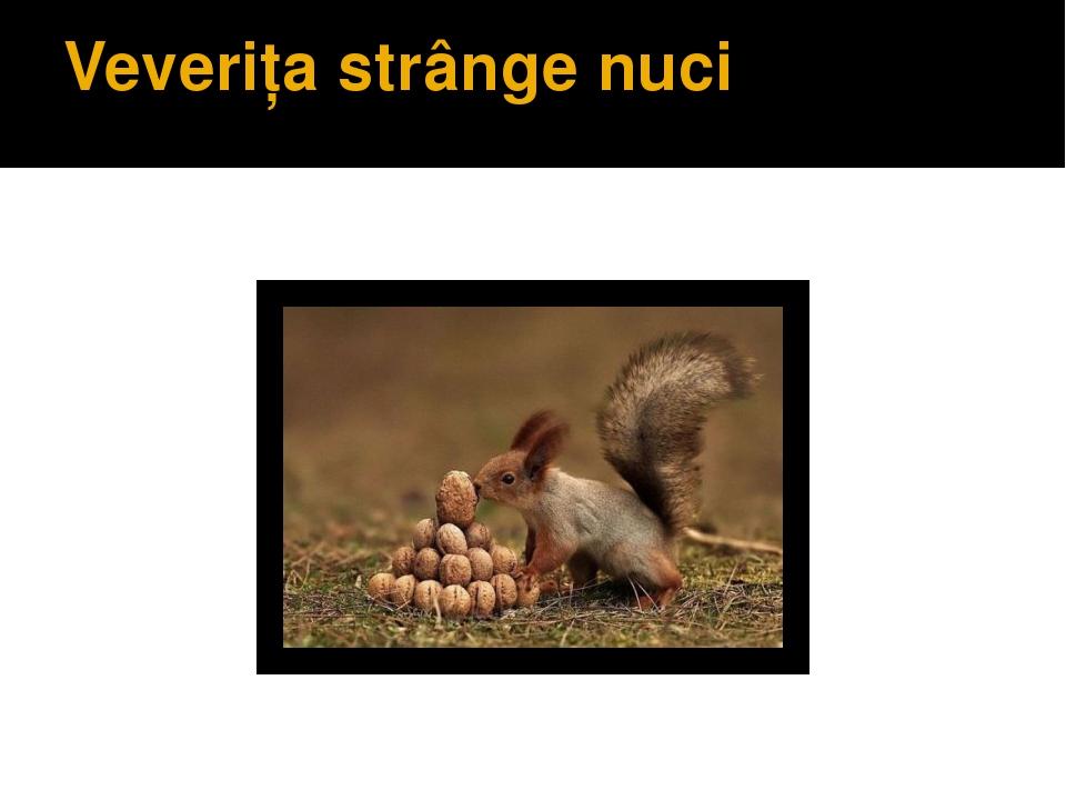 Veveriţa strânge nuci