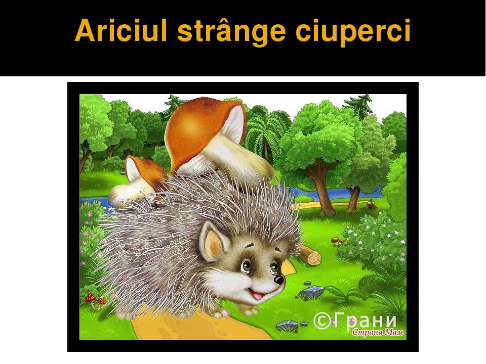 Ariciul strânge ciuperci