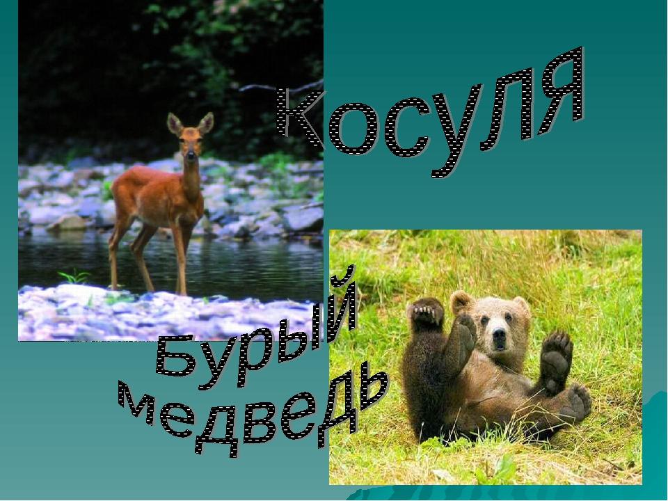 Животные красной книги орловской области фото своей