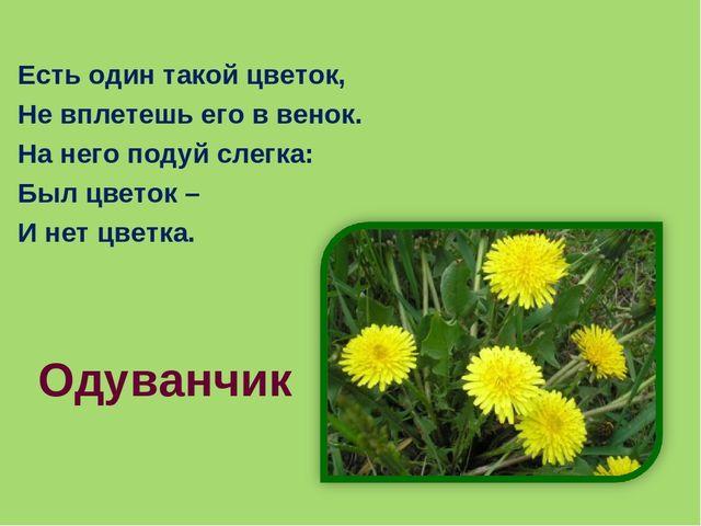 Есть один такой цветок, Не вплетешь его в венок. На него подуй слегка: Был цв...