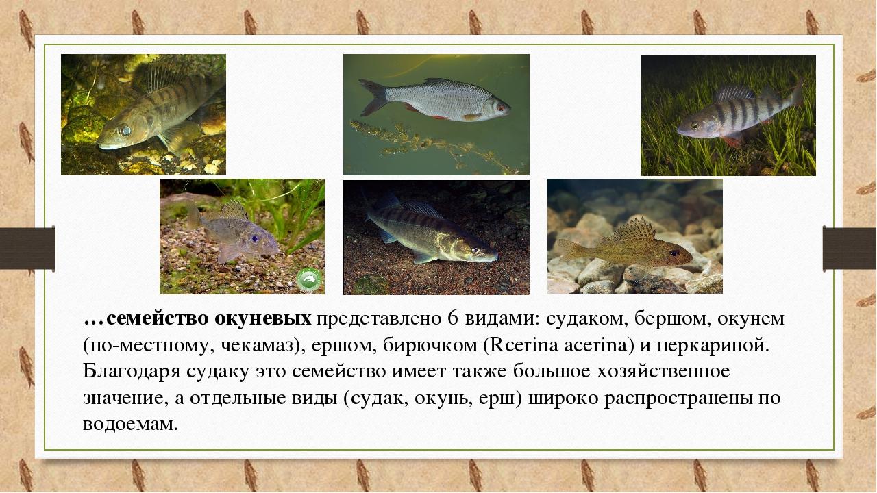 рыбы ростовской области фото с названиями