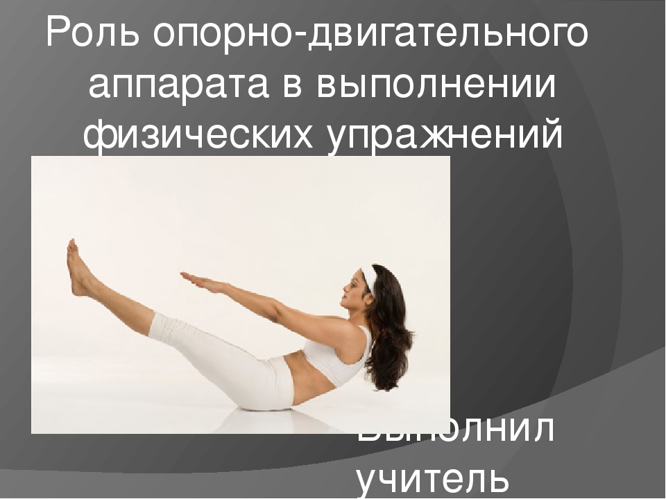 Роль Опорно Двигательного Опората В Выполнение Физических Упражнений