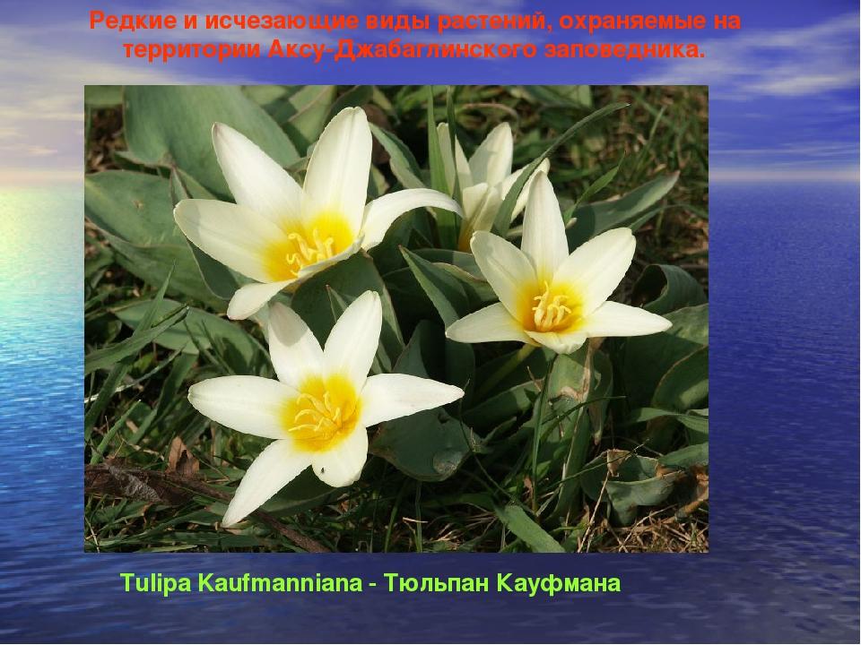 растения на грани исчезновения в россии с картинками фото гостиная белый