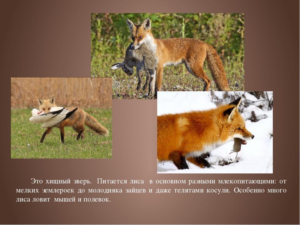 комфортного углового картинки как лиса готовится к зиме позволяют изменять