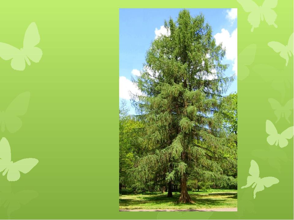 объясняется фото конкурс жизнь леса и судьбы людей версия