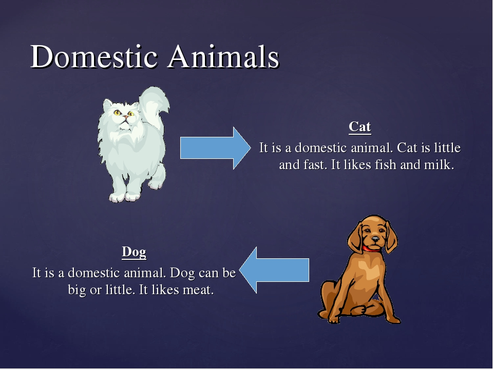 dogs dog and useful domestic animals List of domesticated animals this page gives a list of domestic animals , [1] also including a list of animals which are or may be currently undergoing the process of domestication and animals that have an extensive relationship with humans beyond simple predation.