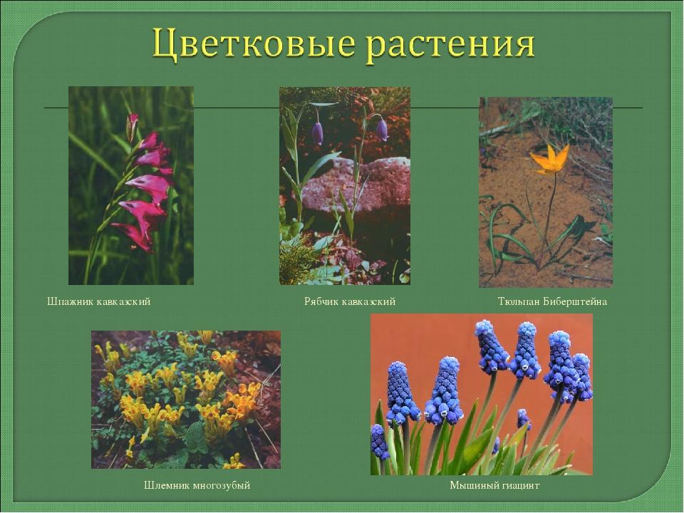 женским растения ставропольский край фото описание автобус