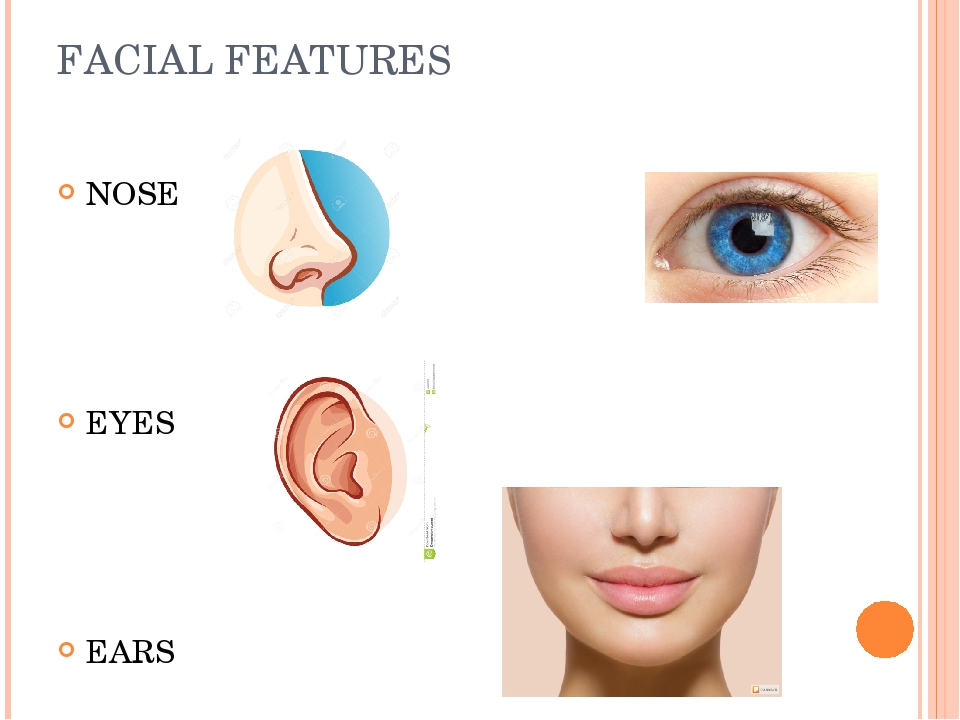 facial-features-labeled